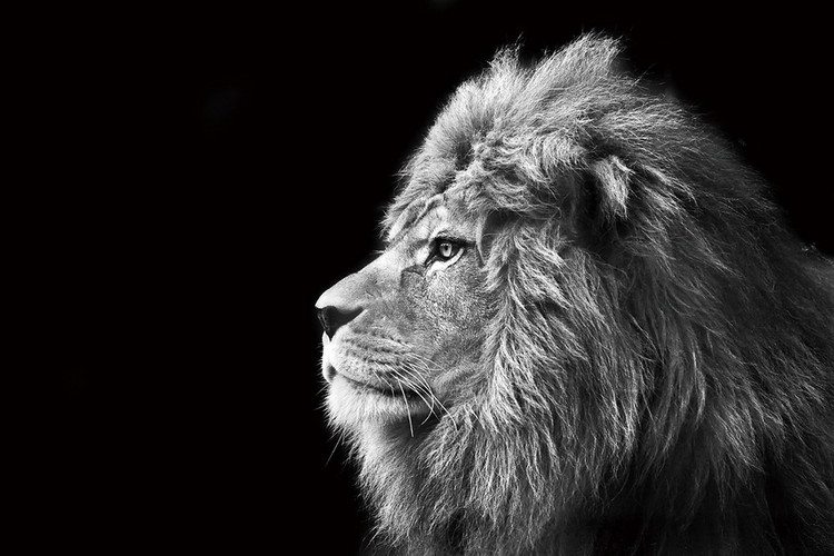 Glass art lion black and white