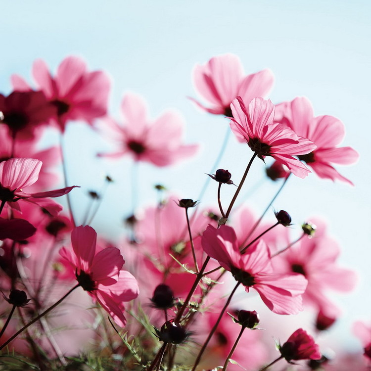 Glass Art Pink Flower in the Meadow