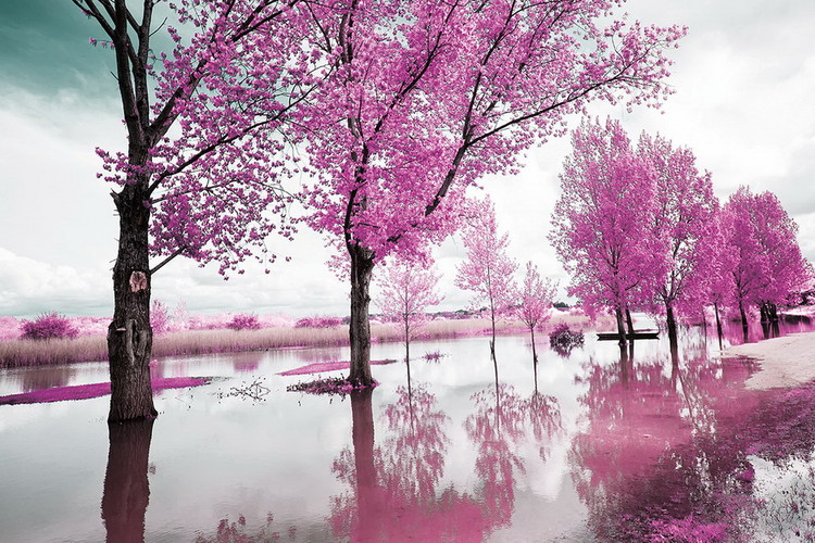 Glass Art Pink World - Blossom Tree 1