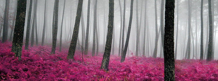 Glass Art Pink World - Pink Forest