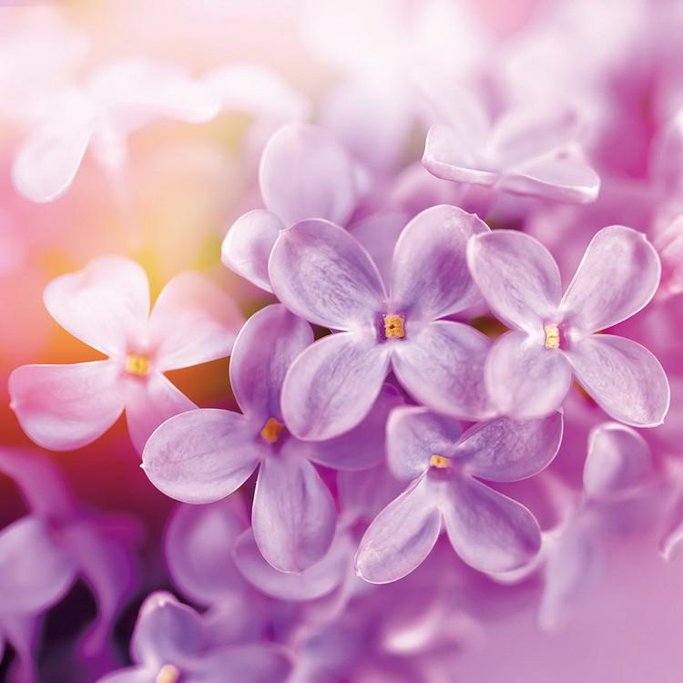 Glass Art Puprle Blossoms