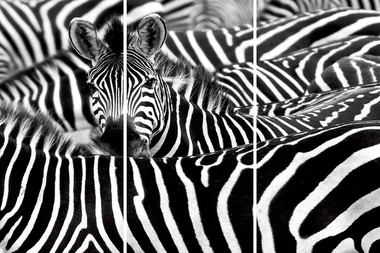 Glass Art Zebra - Many Zebras