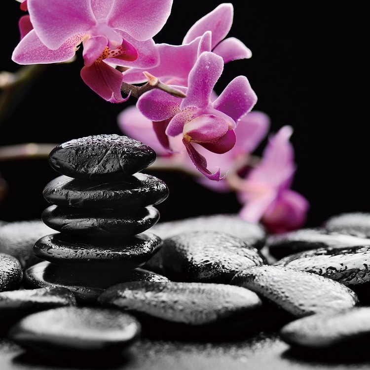 Wall Glass Art - Zen - Pink Orchid : Buy at Europosters.eu