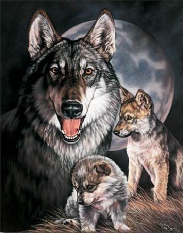 GRAHAM - Wolf Experience Plaque métal décorée