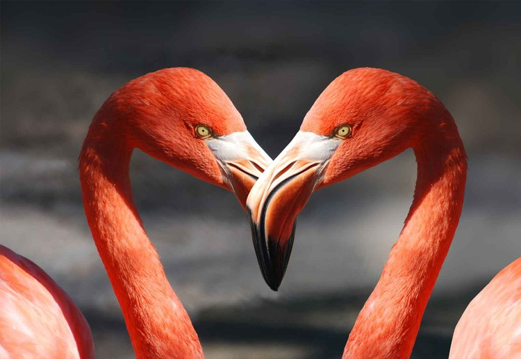 Glass Art  Love Flamingoes