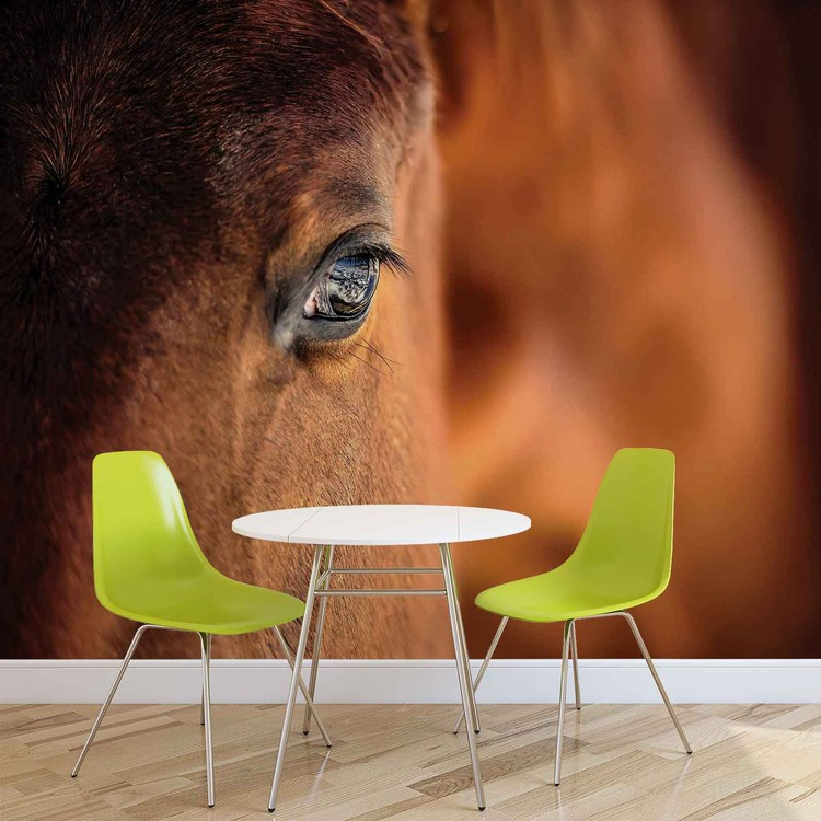 Wallpaper Mural Horse Pony
