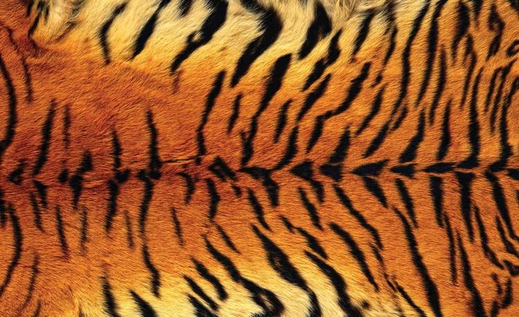 Wallpaper Mural Tiger Skin
