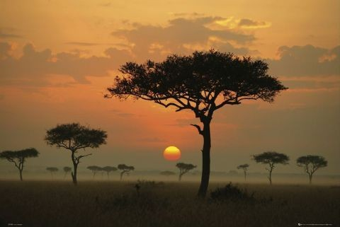 Juliste African plains