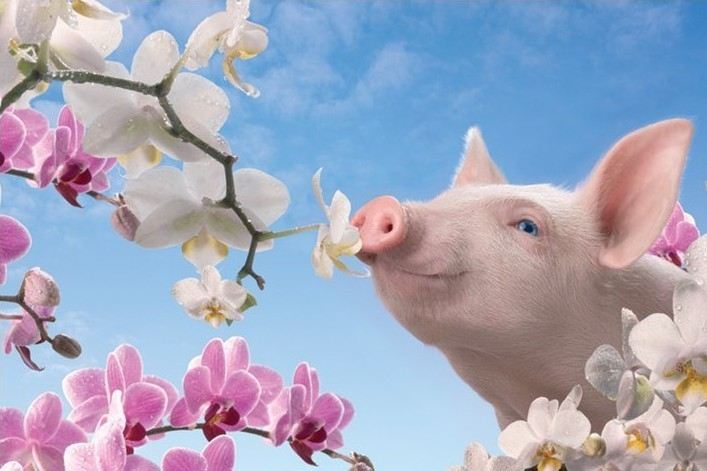 Juliste Blossom pretty - in pink