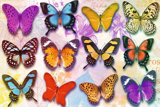 Juliste Butterflies
