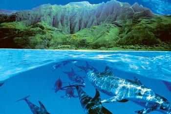 Juliste Dolphin island