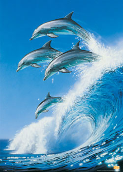 Juliste Dolphins - born free