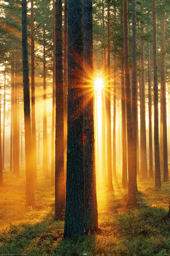 Juliste Forest sunbeams