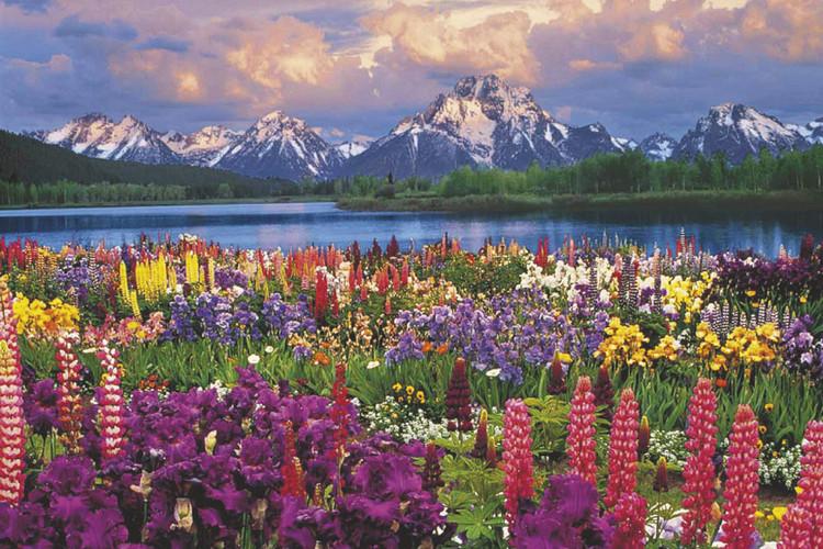 Juliste Grand Teton