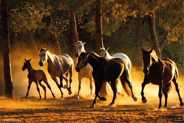 Juliste Horses Andaluces