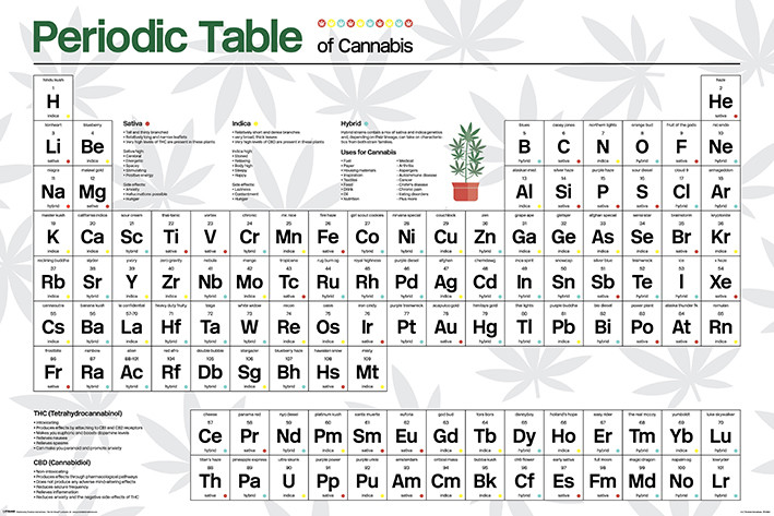 Juliste Periodic Table - Cannabis