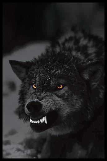 Juliste Prowling wolf