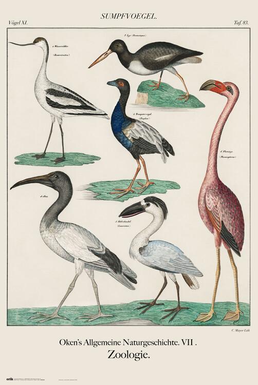 Juliste Vintage Birds