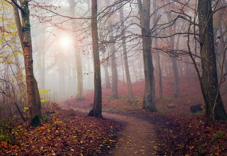 Autumn Sun Valokuvatapetti