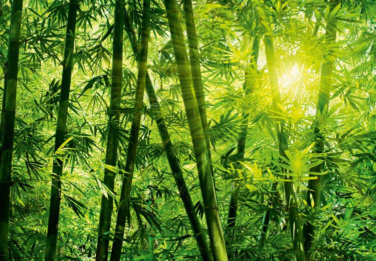 BAMBOO FOREST Kuvatapetti