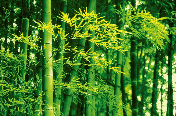 Kuvatapetti, TapettijulisteDAVE BRÜLLMANN - bamboo in spring