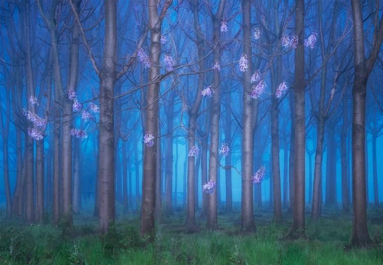 Fairyland Valokuvatapetti