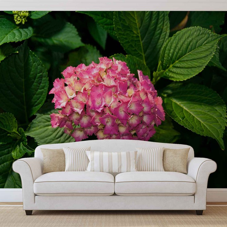 Kuvatapetti, TapettijulisteFlowers Hydrangea Pink