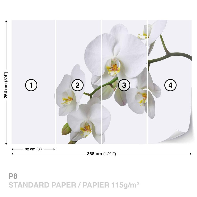 Flowers Orchids Nature White Valokuvatapetti