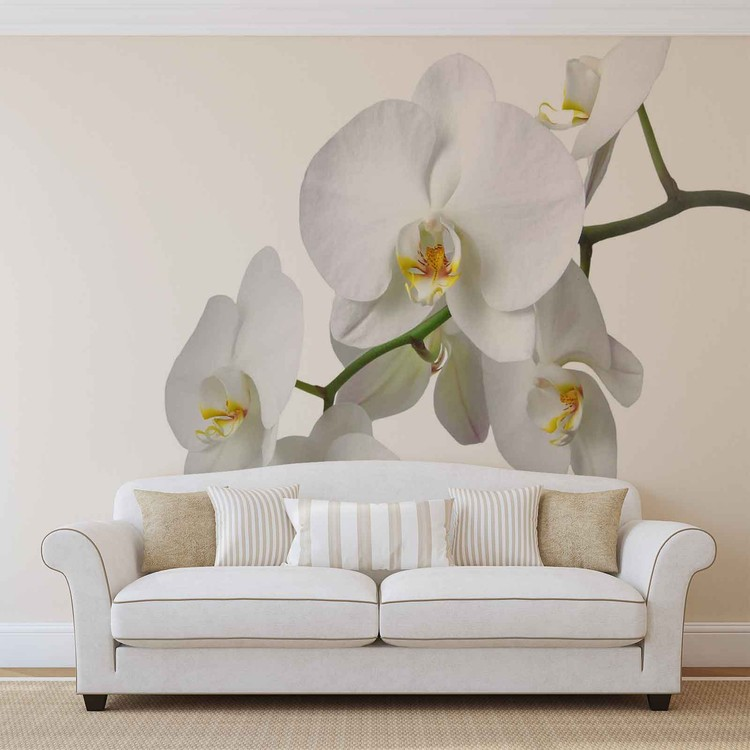 Kuvatapetti, TapettijulisteFlowers Orchids Nature White
