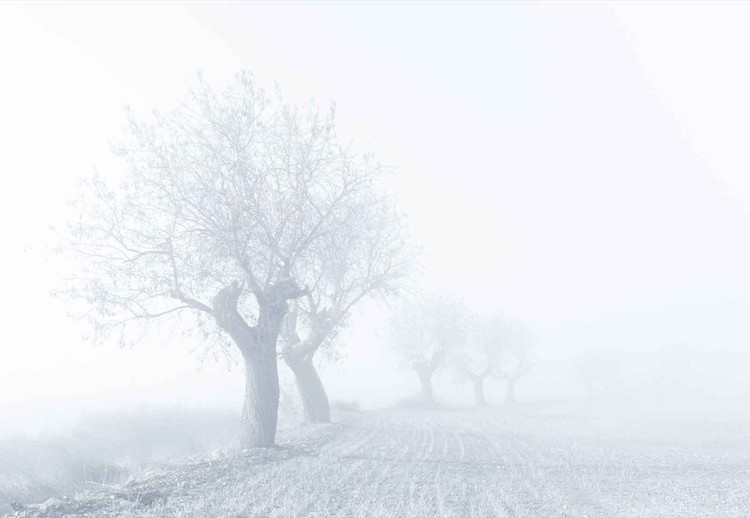 Foggy Sunday Valokuvatapetti