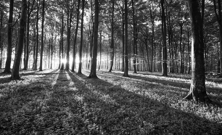 Forest Trees Beam Light Nature Valokuvatapetti