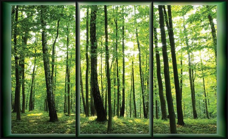 Forest Trees Green Nature Valokuvatapetti
