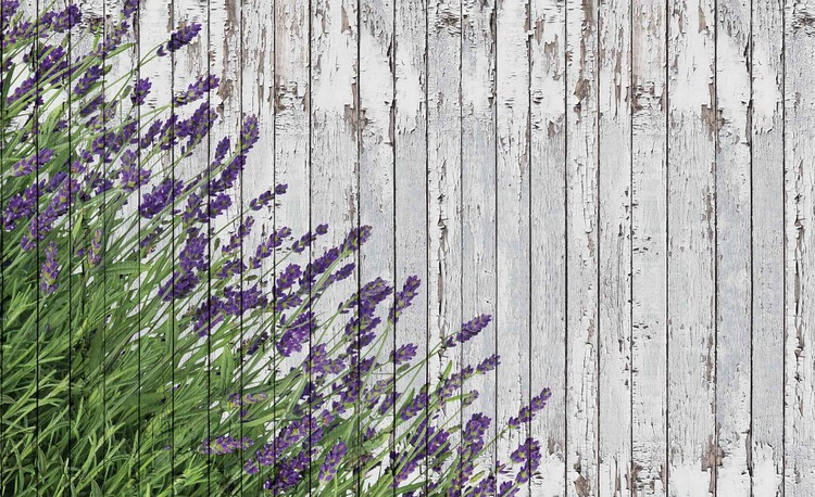 Lavendar Wood Planks Valokuvatapetti