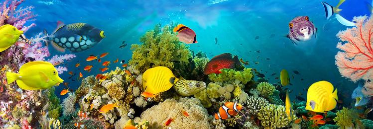 Sea Corals  Kuvatapetti, Tapettijuliste