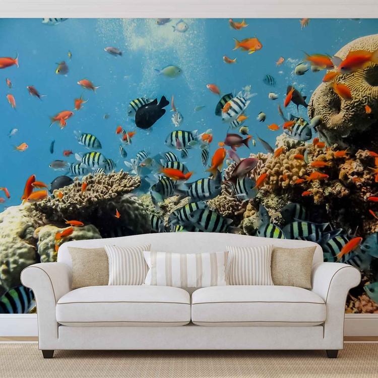 Sea Ocean Fish Corals Valokuvatapetti
