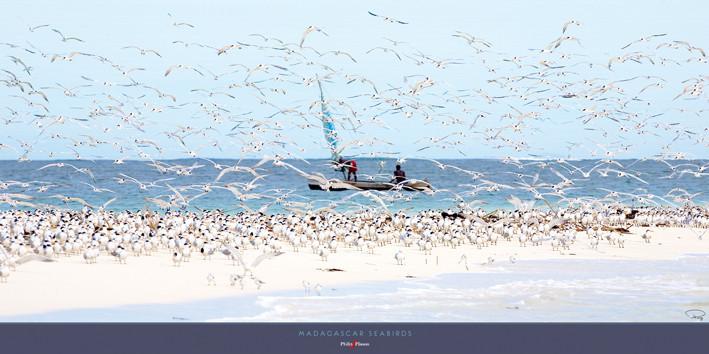 Madagascar seabirds Reproduction d'art