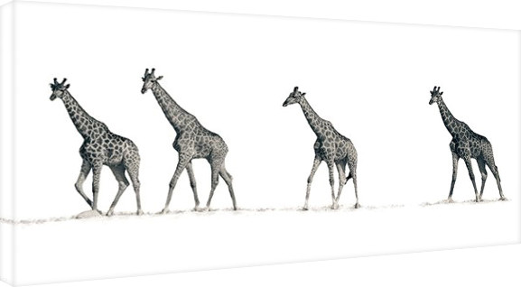 Mario Moreno - The Giraffes Canvas Print