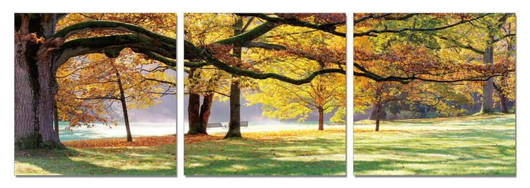 Autumn Trees in the Park Mounted Art Print