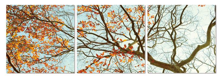 Autumn treetop Mounted Art Print