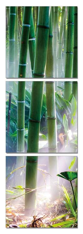 Bamboo Forest - Sunbeams Mounted Art Print