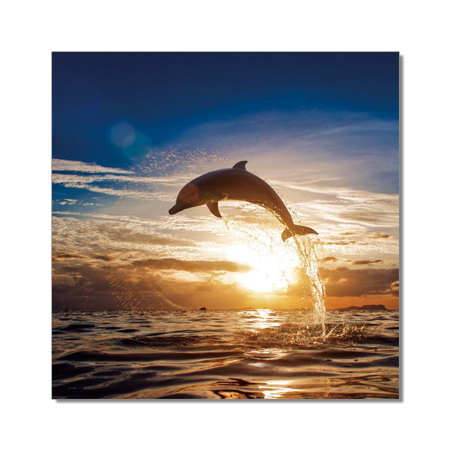 Dolphin during sunset Mounted Art Print