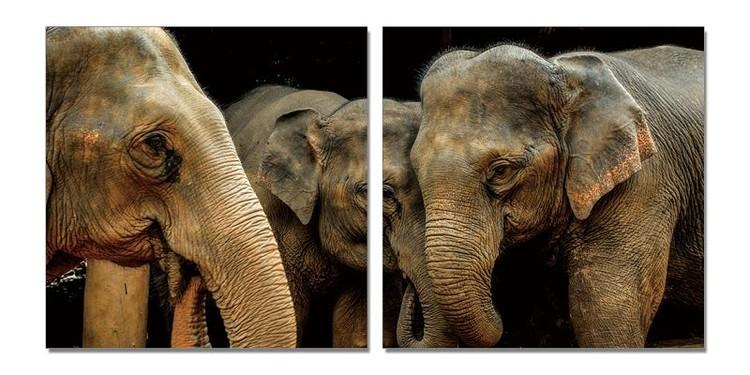 Elephant's love Mounted Art Print