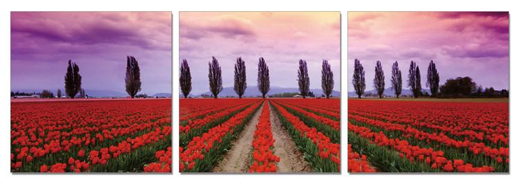 Flower fields Mounted Art Print