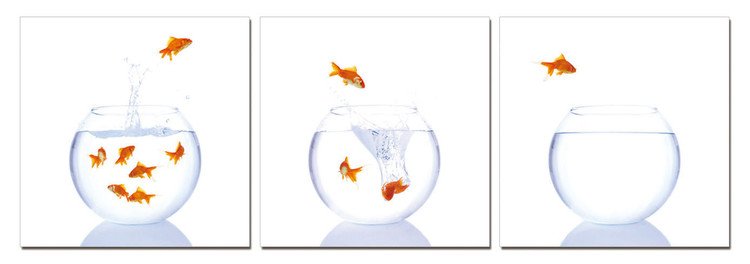 Goldfish in an aquarium Mounted Art Print