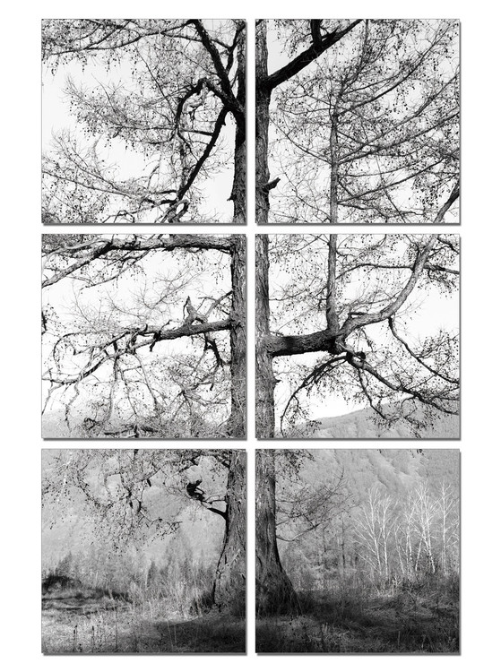 Gray tree Mounted Art Print