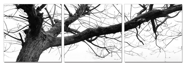 Gray treetop Mounted Art Print