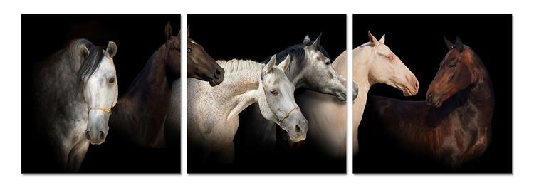 Horses Mounted Art Print