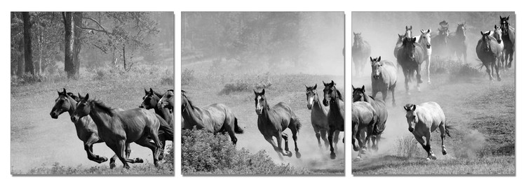 Horses - Running Herd of Horse Mounted Art Print