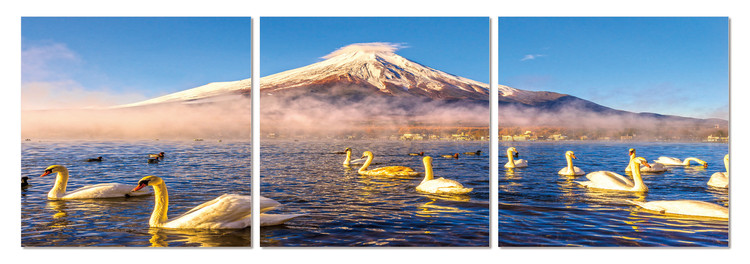 Swans on the lake Mounted Art Print