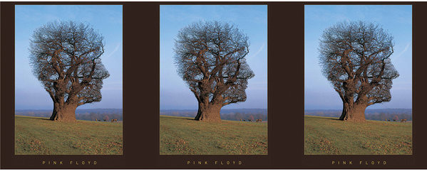 Pink Floyd - Tree Mug